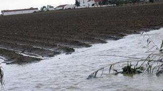 Las fuertes precipitaciones han ocasionado el desbordamiento de un riachuelo en Valdezorras afectando a los cultivos.  Foto: J. C. Vázquez, B. Vargas y A. Pizarro