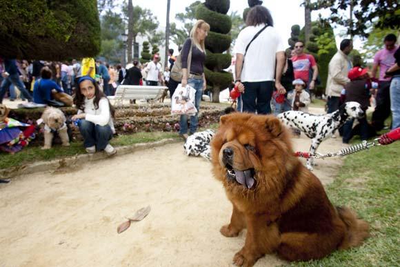 Más de 500 perros participaron en el evento, que contó con una exhibición de las Fuerzas del Orden   Foto: Lourdes de Vicente