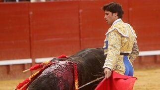 Rivera Ordóñez puso también voluntad y afán, hasta el punto de que quiso agradar  encargándose él mismo de los tercios de banderillas.   Foto: Juan Carlos Toro