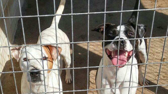 Dos de los perros que se encuentran actualmente en el refugio que ahora mismo gestiona Urbaser a través de Patas.