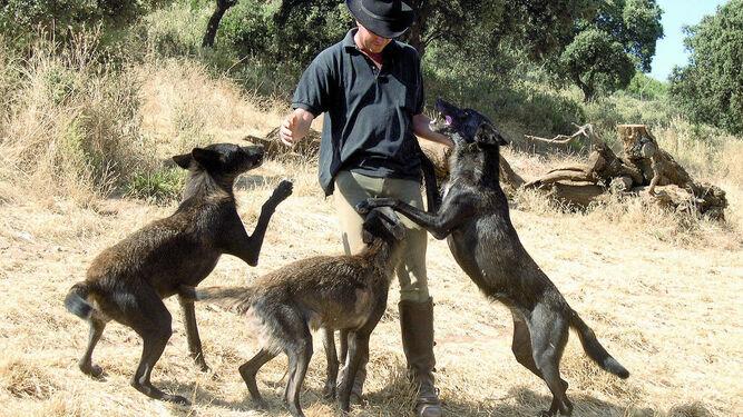 Un hombre juega con varios lobos.