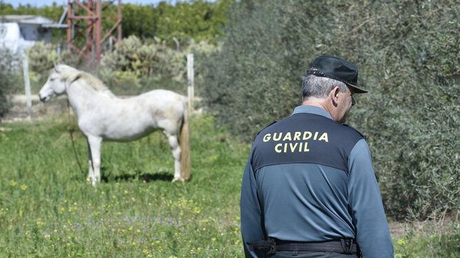 Un guardia civil inspecciona la zona, con olivos y caballos.
