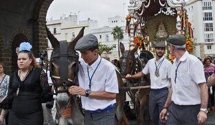 Una pareja de mulos tiran de la carreta del Rocío de Cádiz para cruzar las puertas de Tierra camino de Almonte.