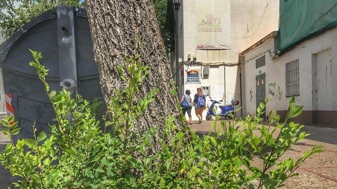 El pp critica que parques y jardines sufran falta de - Mantenimiento parques y jardines ...