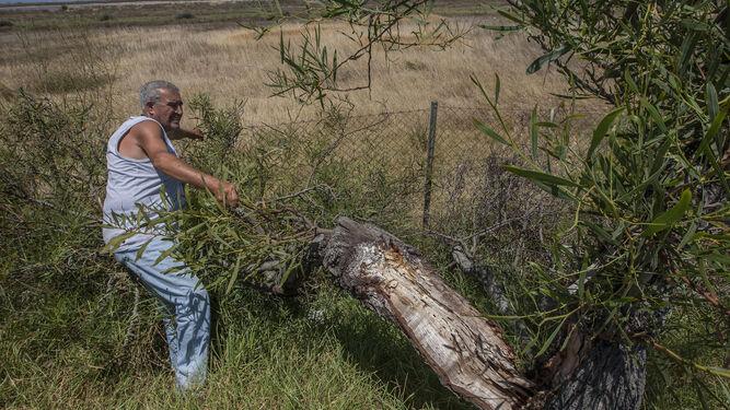 Ganfornina, junto al árbol que está tirando la alambrada que protege la superficie donde vive.