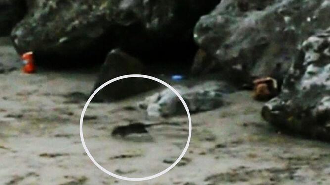 Presencia de ratas en la playa de Santa María del Mar al caer la tarde