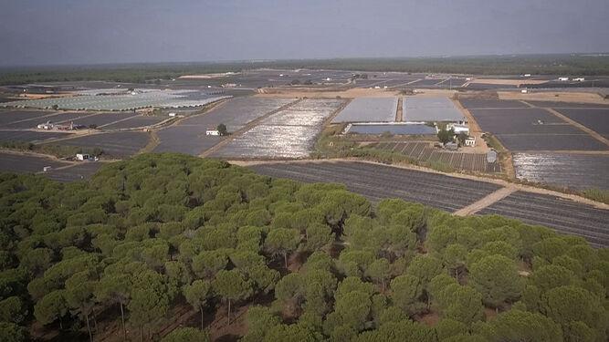 Imagen de la frontera del Parque de Doñana con el mar de plásticos al fondo.