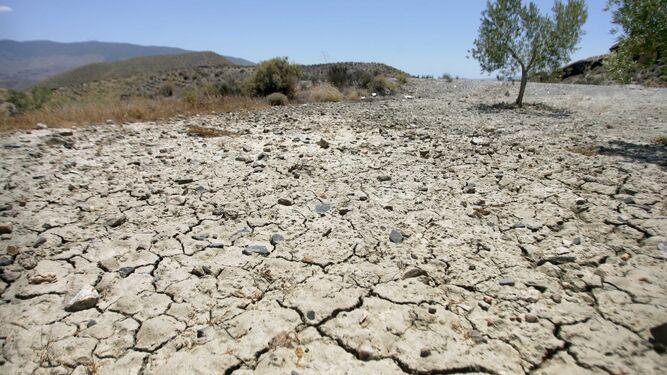 Olivar y cambio climáticoYa hay inadaptación varietal por falta de frío