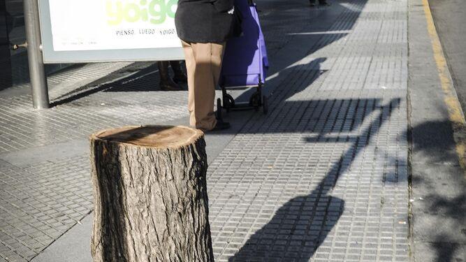 Talan 4 árboles dañados por la obra de Avenida del Puerto