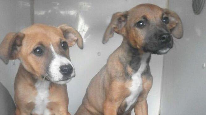 Dos cachorros de perro, en el furgón que los traslada al centro.