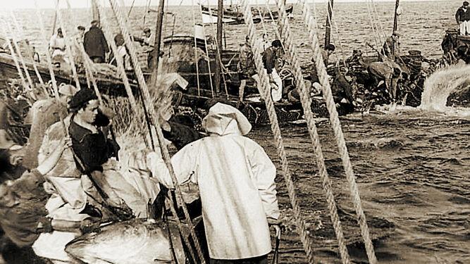 Imagen de una levantá en aguas de Sancti Petri a mediados de los años 50.