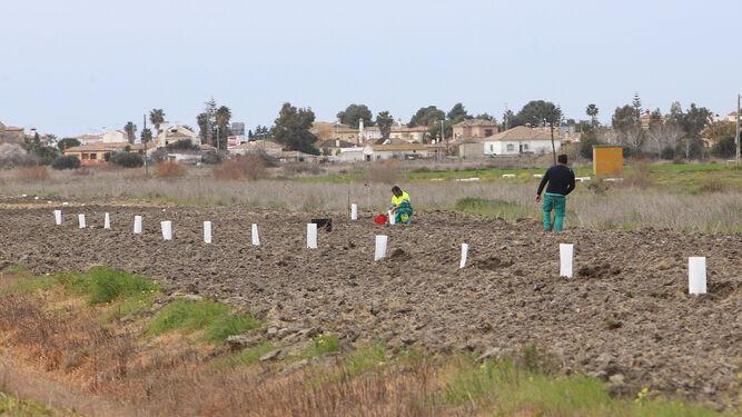 Vista de trabajadores en el momento de colocar las distintas especies arbóreas de manera alineada.