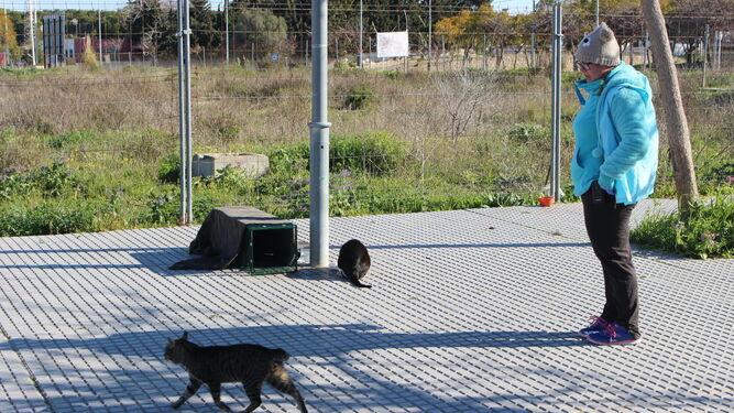 Una de las voluntarias de la protectora Segunda Oportunidad SOS intenta capturar a un gato macho en Puerto Real para proceder a su esterilización.