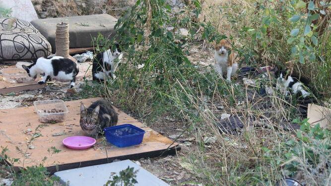 Una de las colonias de gatos que se están controlando en Puerto Real.