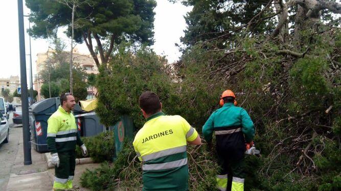 Retirada de un árbol derribado por el viento en el parque Sacramento.