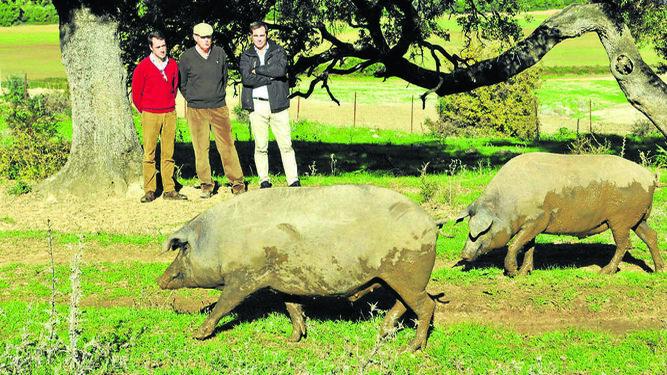El presidente y el secretario  general de Asaja-Cádiz  y José Pravia admiran  los cerdos ibéricos.